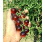 Indigo Blue Berries