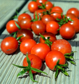 Koralik | polodivoké rajče | permaseminka.cz