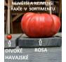 Rosa | rajče tyčkové | PERMASEMÍNKA.CZ