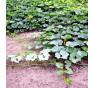 Green Hokkaido ( Zelené hokaido ) | PERMASEMÍNKA.CZ