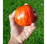 Striped Stuffer| rajče tyčkové | PERMASEMÍNKA.CZ