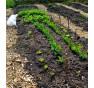 Bezorebné záhony inspirované knihou Zahradničení bez rytí