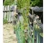 Poschoďová cibule rostla hned za plotem jeho zahrádky. Podle majitele zahrádky pana J. Pinkavy jsme ji pojmenovali Pinkava.