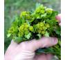 Poupata barborky lze využít místo brokolice.