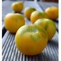 Wapsipinicon Peach - broskvové rajče