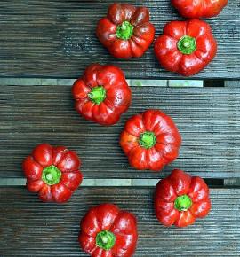 Liebesapfel - sladká paprika| PERMASEMÍNKA.CZ