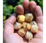 Mochyně peruánská, Ananasová | PERMASEMÍNKA.CZ