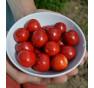 Liči rajčátko