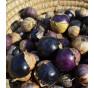 Mochyně dužnoplodá fialová