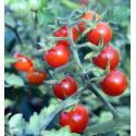 Divoké - Matt's Wild Cherry