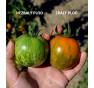 Green Zebra - zelené rajče