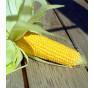Tramunt - cukrová kukuřice, nehybridní